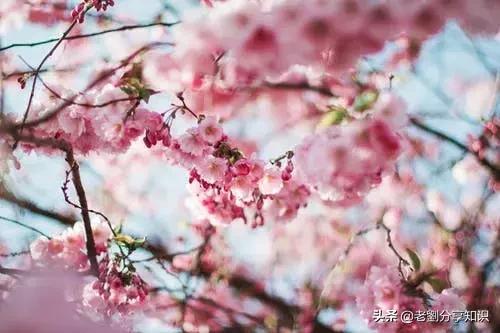 写一首春天的诗,一百个描写春天的优美诗句,真美!
