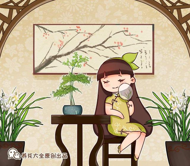 松寓意,家里文竹总是养不好?那就养棵蓬莱松吧,四季常青不是问题