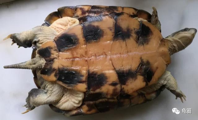 乌龟的寓意,你的龟龟可以陪你到老吗(多篇实录)?
