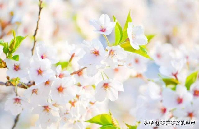 温庭筠的诗,温庭筠写了首肉麻情诗,没点文化的都看不懂,看懂后送上大写的服