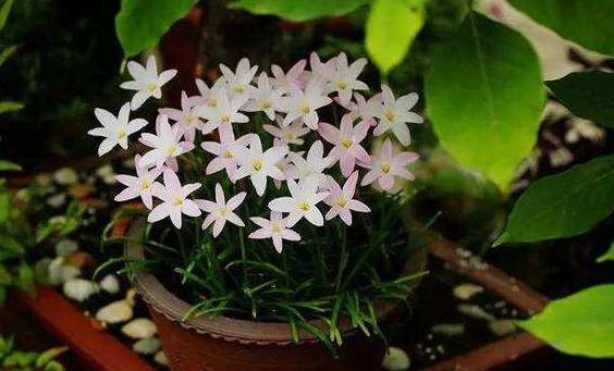 家庭养花选谁合适?首选4种花,好看又好养,花期长、开花数量多