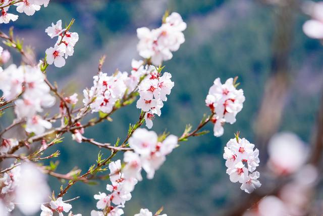 杨贵妃的诗,十首含笑诗词:你的微笑,胜过阳光!