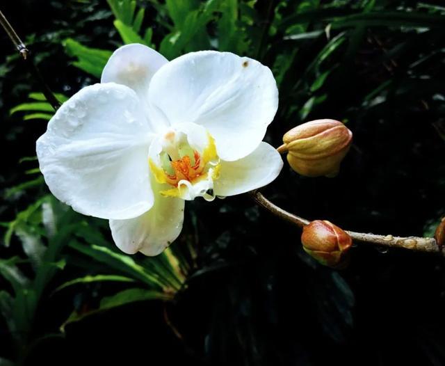 花好词好句,唐诗宋词里最美的10朵花,赏一朵花,享一身诗意