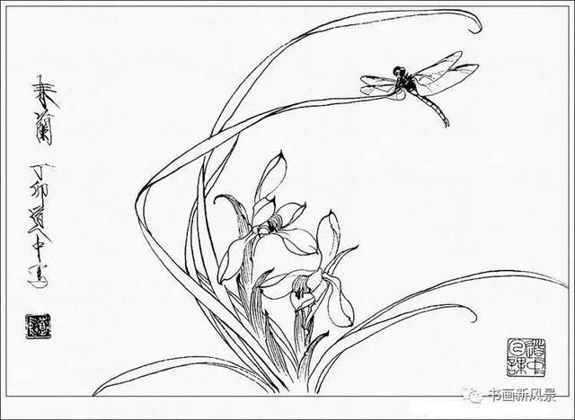 白描花卉,工笔花卉草虫白描精品30幅