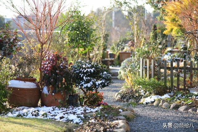 灌木有哪些,冬日花园里的常绿灌木,推荐及介绍 | 园丁