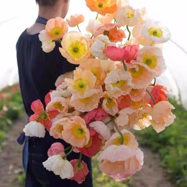 """属猪花,十二生肖对应的守护花你知道吗?赶紧看过来领走你的专属""""生肖花"""