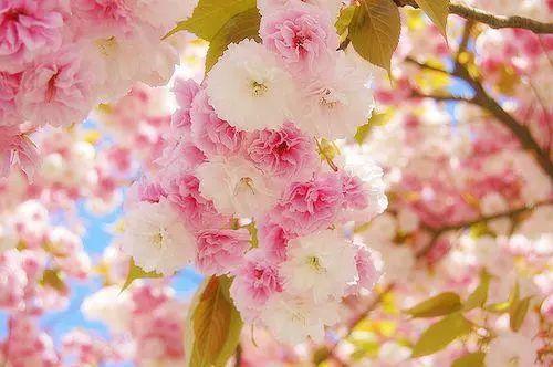 珍惜的短句,阳光生活感悟句子:人生不长,且活且珍惜,生命短暂,一定要爱惜