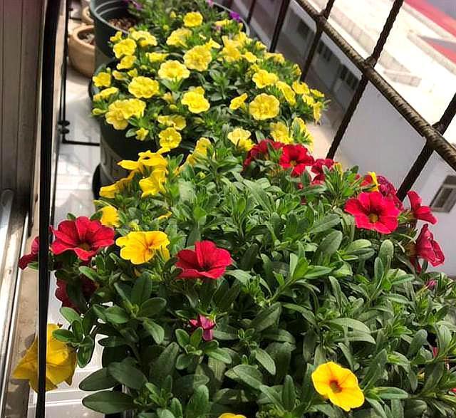 """家庭养花,必备的""""肥料""""有哪些?怎么使用?小花匠告诉你"""