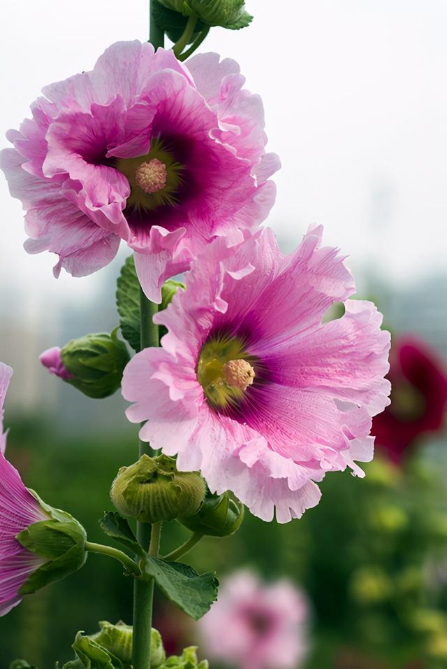 """种高颜值美花的花语,它们传奇的故事,你听过吗?"""""""