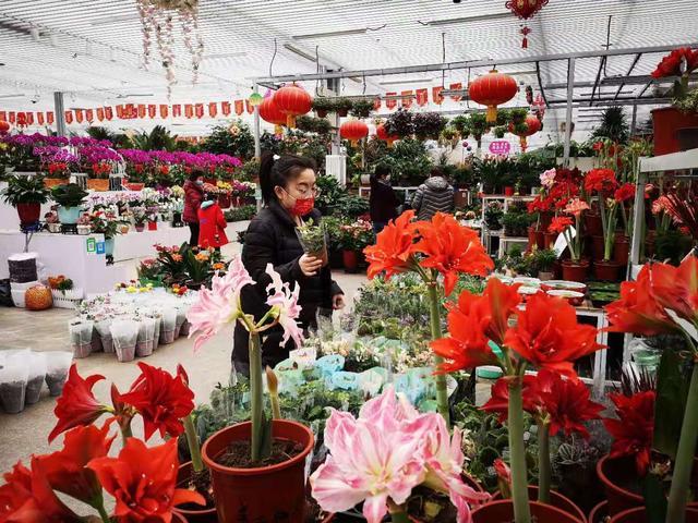 """盆景花卉价格,年宵花热度不减 价格相比节前更""""美丽"""""""
