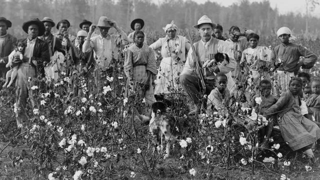 为何欧洲国家一直揪着棉絮产业链没放?