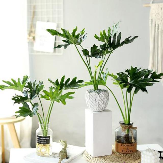 盘点我家最好养的5款室内绿植