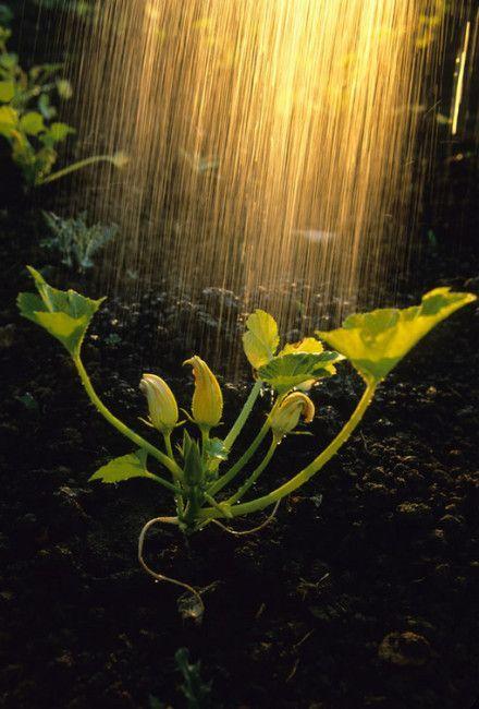 雨的成语,不整理不知道,原来关于雨的谚语成语诗词这么多,需要的人有福了