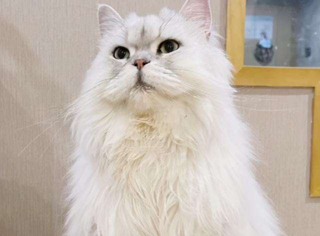 女主人浴室摔倒,貓咪在門外焦急呼喚,那擔心主人的眼神太暖了 家有萌寵 第2张