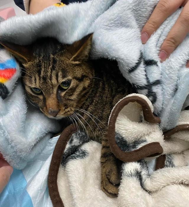 狸花貓被困37天,奇跡生還,被救時只有2斤,它是怎麼活下來的 家有萌寵 第6张