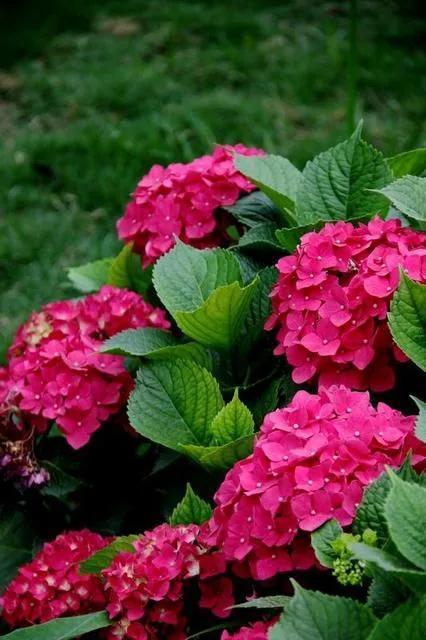 夏天的花有哪些,几种花夏季怒放,现在栽种正当时