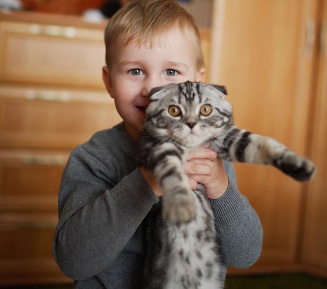 你真的會抱貓嗎?5種常見的抱貓姿勢,但3種都是錯的 家有萌寵 第3张