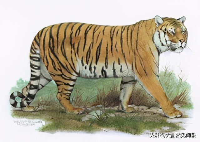 濒危动物有哪些,濒危野生动物知多少?