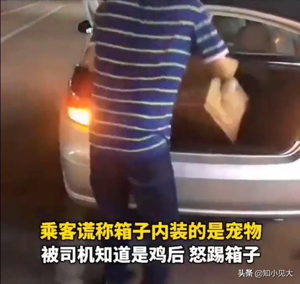 小情侣带宠物瞒着司机坐出租车 司机抱摔宠物箱子
