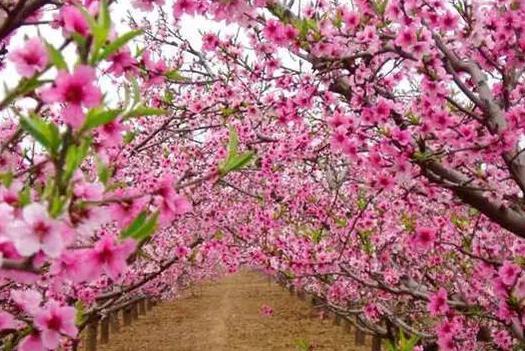 哪3个属相,一生一次的桃花劫就在今年,烂桃花最多