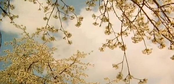 绝美奇幻电影:《野花》讲述唯美哀伤的故事
