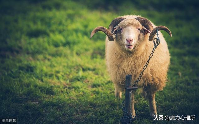 包含生肖鸡和生肖羊的婚姻配对运势的词条-第1张图片-天下生肖网