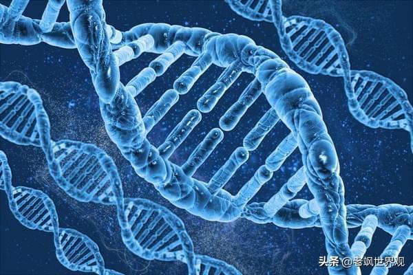 """日本""""胚胎""""实验,培育新人种,是科学进步还是道德沦丧?"""
