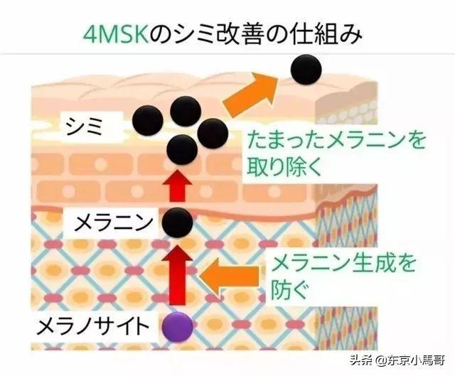 日本公认3大祛皱王解析,POLA、怡丽丝尔、悦薇去皱到底哪家强?