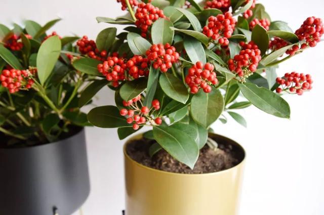 土豪们喜欢养的5栽高价绿植,贵气逼人,养一盆娴雅又大气