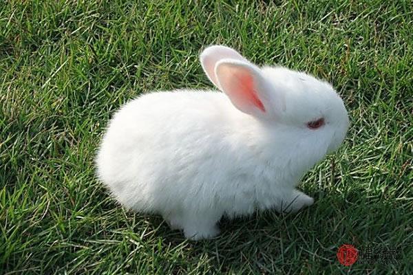 包含87兔配什么生肖最好的词条-第1张图片-天下生肖网