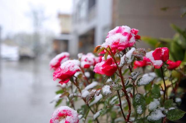直播春天|一场桃花雪后,临安龙门秘境美成这样了