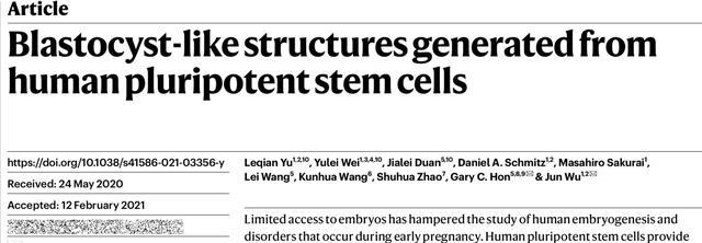 """构建首个体外人囊胚模型!人类胚胎早期发育""""黑盒""""打"""