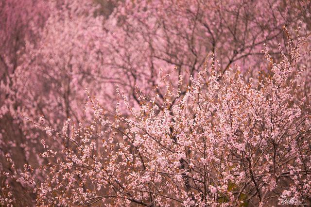 福利   园林花卉与野花 春天赏花全攻略