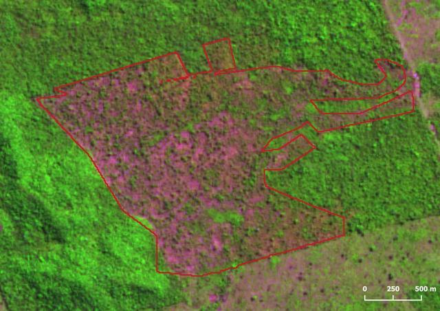 中国沙漠变绿地,巴西砍伐森林却达10年最强,世界大草原在出现?