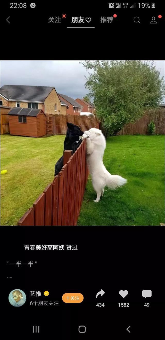 今日笑话:两只狗的爱情