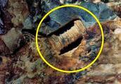 """3亿年前的""""螺丝""""镶嵌在石块中,就此揭开一个史前的巅峰时代"""