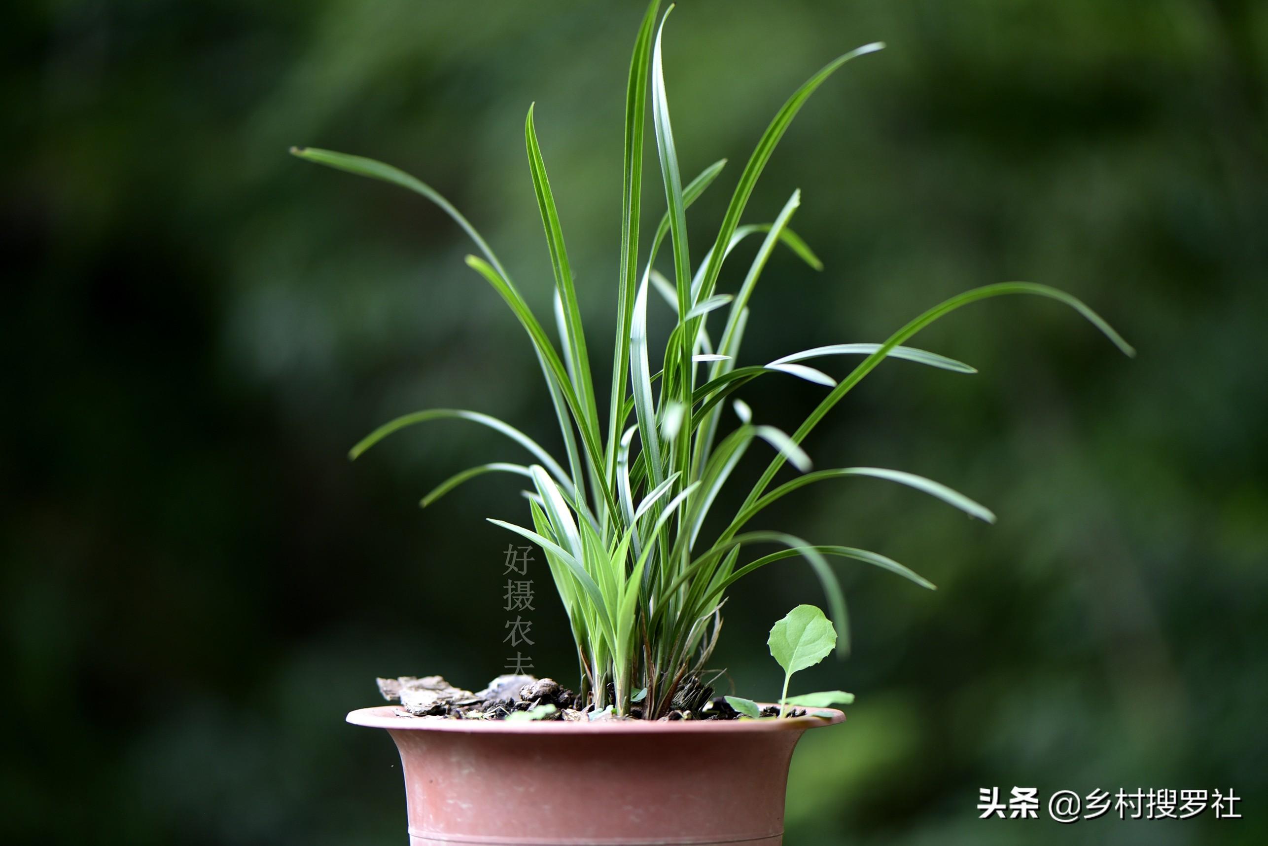 怎样自制兰花的配土方法(兰花盆栽用什么土最好)插图(3)