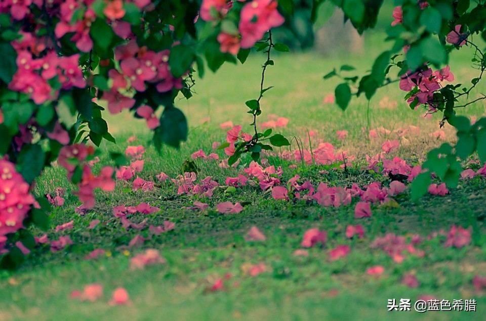 """春色无限好,摄影怎么表现""""陌上花开,可缓缓归矣""""的美好画面?"""