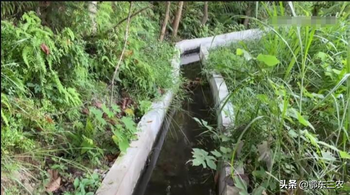 江西小伙利用一千米的水渠养殖石螺起家,今年创造收入24万元