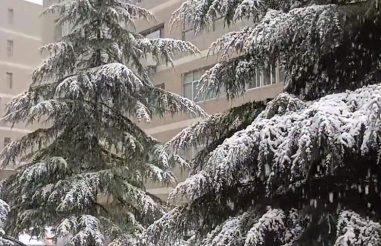 一夜入冬!甘肃多地鹅毛大雪漫天飞,气象局:冷空气仍在东移南下
