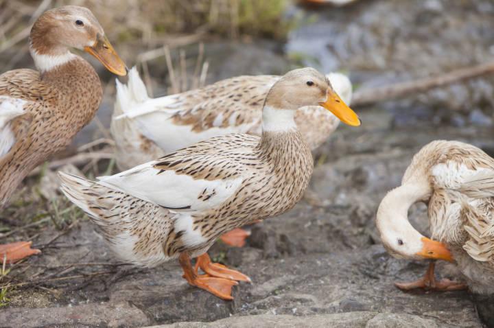 乏力,发热,胸闷,无法行走,原来和她曾围观宰鸭有关