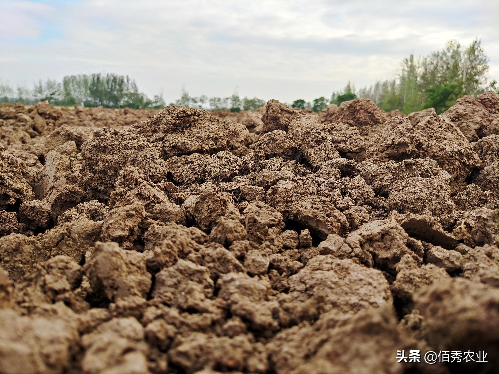 """小麦种植季:农民买""""高档""""化肥被村里人嘲笑,老父亲生气离开"""