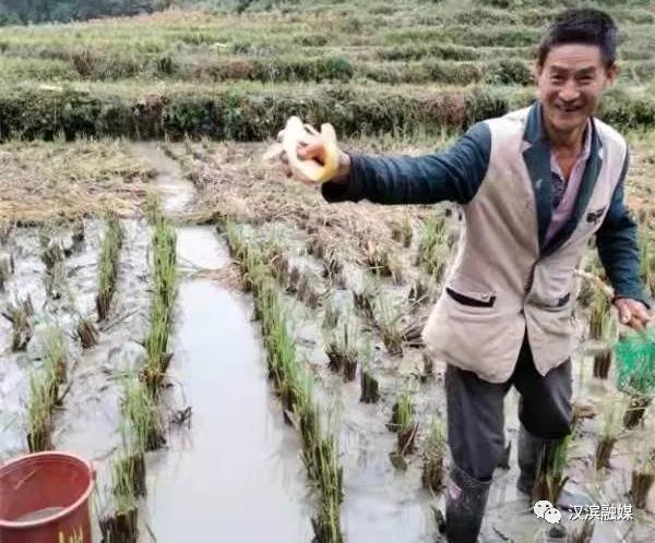 打卡田心社区 体验稻鱼共生的丰收喜悦