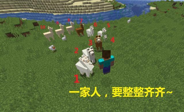 我的世界:关于羊驼的五大知识!队伍上限为10只 空手如何驯服?