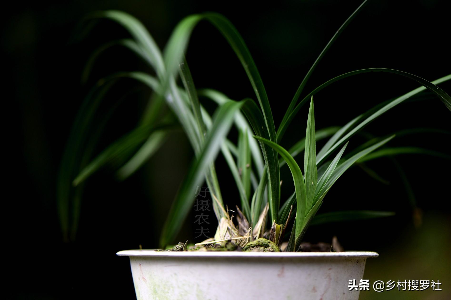 怎样自制兰花的配土方法(兰花盆栽用什么土最好)插图(5)