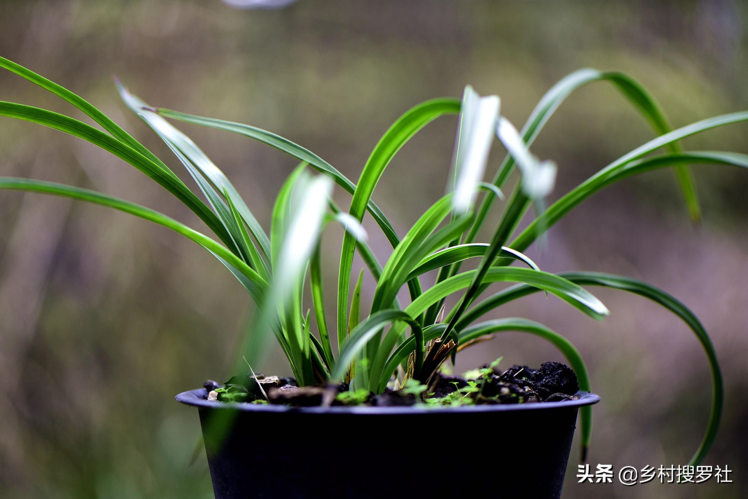 怎样自制兰花的配土方法(兰花盆栽用什么土最好)插图(4)