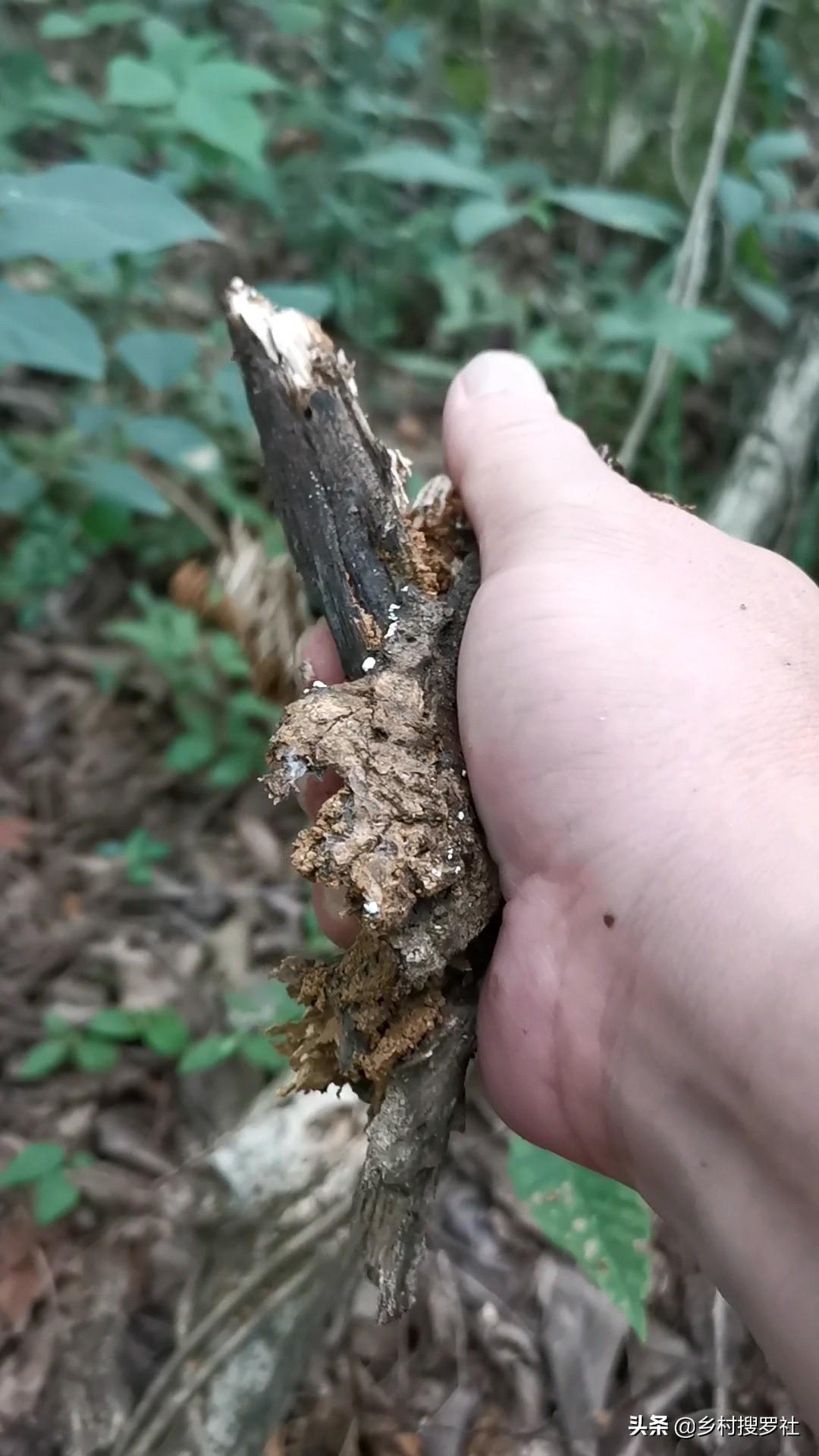 怎样自制兰花的配土方法(兰花盆栽用什么土最好)插图(10)